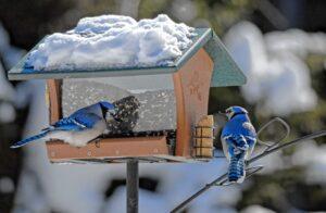 Mentovics Éva: A madáretetőnél