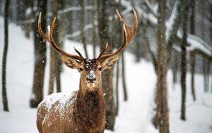 Kányádi Sándor: Hallgat az erdő