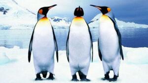 Tamkó Sirató Károly: Pingvintánc