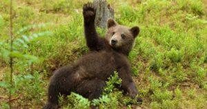 Romhányi József: Medve tanköltemény