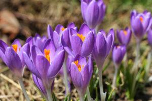 Osvát Erzsébet: Tavaszváró mondóka