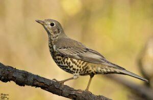 Szabó T. Anna: A madár