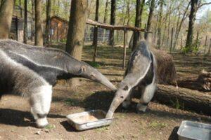 Varró Dániel: Andris beszélget az állatokkal (részlet)