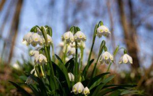 József Attila: Tavasz van! Gyönyörű!