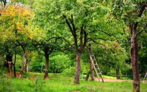 Zelk Zoltán: Az én kertem