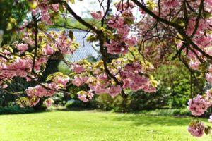 József Attila: Kertész leszek