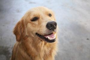 Nemes Nagy Ágnes: A lopós kutya