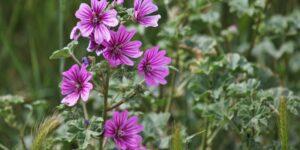 Nemes Nagy Ágnes: Bors néni kertje