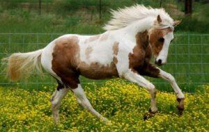 Nemes Nagy Ágnes: Tarka ló