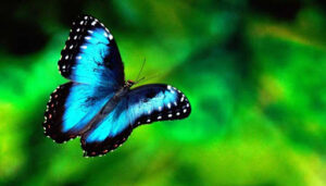 Mentovics Éva: A pillangó tánca